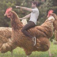The Chicken Warrior